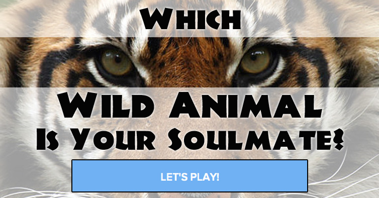 Quiz: Which Wild Animal Is Your Soulmate? | 754 x 394 jpeg 108kB