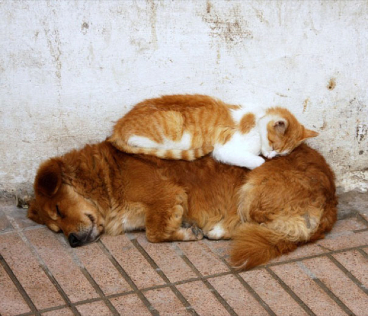 cats taking naps to a whole new level