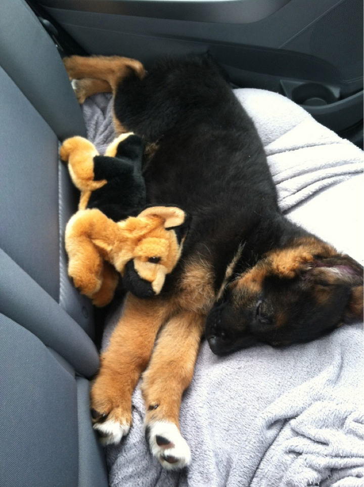 16 Unbelievably Adorable Puppies Sleeping With Their Stuffed Animals