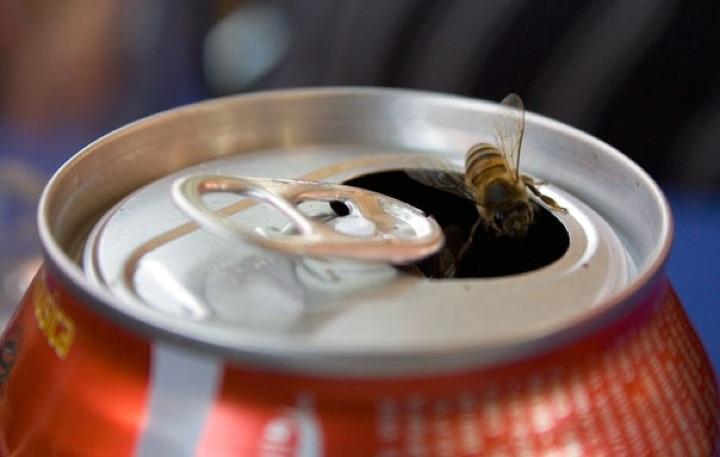 Soda-Can-Bee