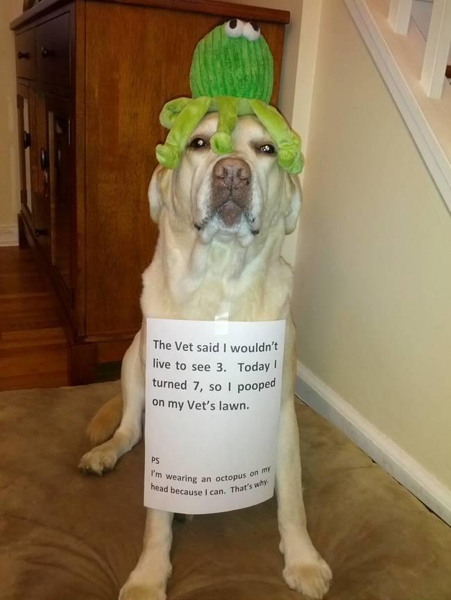 bad-dog-17